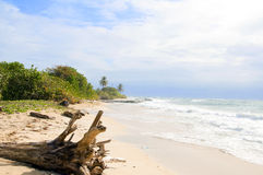 Driftwood  beach Corn Island Nicar Stock Photos