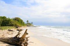 Driftwood  beach Corn Island Nicar Stock Photos