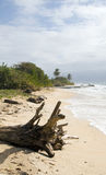 Driftwood  beach Corn Island Nicar Royalty Free Stock Photography