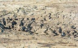 Driftwood Beach Critters Stock Photo