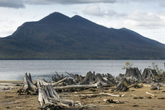 Driftwood on beach of Flagstaff Lake with the Bigelow Mountains. Royalty Free Stock Images