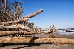 Driftwood Beach at Hunting Island State Park in Georgia stock photography