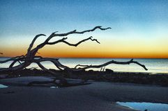 Driftwood Beach Jekyll Island, Georgia at Sunrise Royalty Free Stock Photo