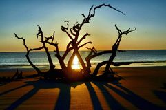 Driftwood Beach Jekyll Island, Georgia at Sunrise Royalty Free Stock Photography