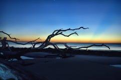 Driftwood Beach Jekyll Island, Georgia at Sunrise Stock Image