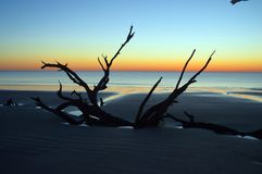 Driftwood Beach Jekyll Island, Georgia at Sunrise Stock Photo