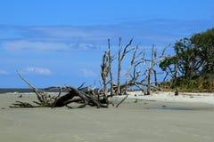 Driftwood Beach Jekyll Island Royalty Free Stock Image