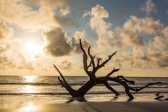 Driftwood Beach Jekyll Island Stock Photography