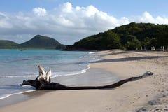 Driftwood on Beach Royalty Free Stock Photos