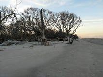 Driftwood beach Stock Photos