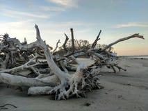Driftwood beach Stock Photography
