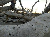 Driftwood beach Royalty Free Stock Image