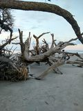 Driftwood beach Stock Images