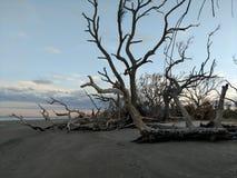 Driftwood beach Royalty Free Stock Photos