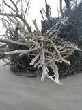 Driftwood beach royalty free stock images