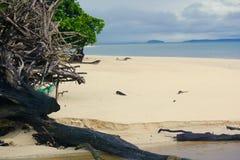 Driftwood on a beach Stock Photography
