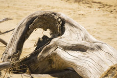 Driftwood. On a beach in New Zealand stock photo