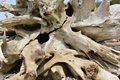Driftwood on a Beach, Olympic Peninsula Stock Photos