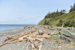 Driftwood on a Beach, Olympic Peninsula Royalty Free Stock Photos