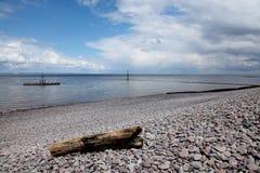 Driftwood on Beach Stock Photo