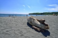 Driftwood on the beach Stock Images