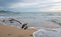 Driftwood on the beach in San Jose Del Cabo near Cabo San Lucas in Baja California Mexico. BCS Stock Images