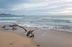 Driftwood on the beach in San Jose Del Cabo near Cabo San Lucas in Baja California Mexico. BCS Stock Photography