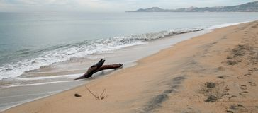 Driftwood on the beach in San Jose Del Cabo near Cabo San Lucas in Baja California Mexico. BCS Royalty Free Stock Photo