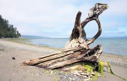 Driftwood on Beach with Seaweed Stock Photo