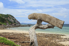 Driftwood on the beach. Sign wood Royalty Free Stock Image