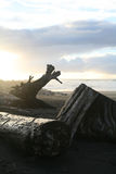Driftwood on a beach with the sunset behind. Silver driftwood on a beach with the sunset in the background and breaking clouds Royalty Free Stock Photo