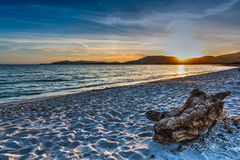 Driftwood on the beach at sunset Stock Photos