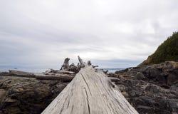 Driftwood bela zdjęcia stock