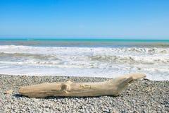 Driftwood bela kłaść na brzeg Zdjęcie Royalty Free