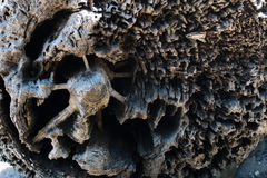 Driftwood beli zakończenia up szczegóły rozpadowy i wysuszony - out drewno Zdjęcie Royalty Free