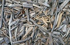 Driftwood blanqueado en la playa Foto de archivo libre de regalías