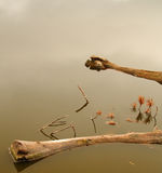 Driftwood on Calm water. Tree branches in the still water of a pond Royalty Free Stock Image
