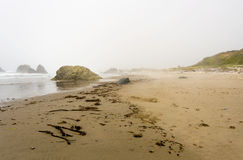 Driftwood on a coast Stock Images