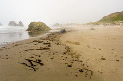 Driftwood on a coast Royalty Free Stock Image