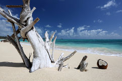 Driftwood Coconut Sandy Beach Turquoise Ocean Hawaii Stock Images