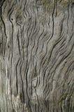 Driftwood con granulo esposto all'aria Fotografia Stock