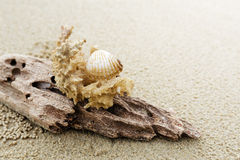 Driftwood and coral on beach Royalty Free Stock Photos