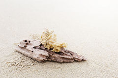 Driftwood and coral on beach Stock Photography