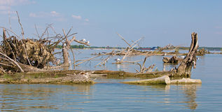 Driftwood on the Cunovo dam  on the Danube river and  mews Royalty Free Stock Photos