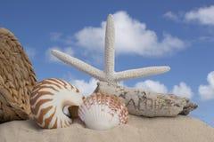 Driftwood de los Seashells en fondo marrón Fotos de archivo libres de regalías