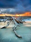 Driftwood dello sprazzo di sole Immagine Stock
