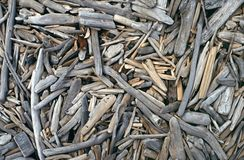 Driftwood descorado na praia Foto de Stock Royalty Free