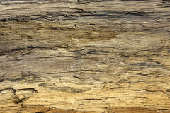 Driftwood detail sand point beach England uk. Horizontal royalty free stock image