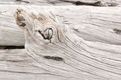 Driftwood. Detail of weathered driftwood found on the Chilean coast in Patagonia Stock Image