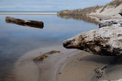 Driftwood in DOF Stock Photos